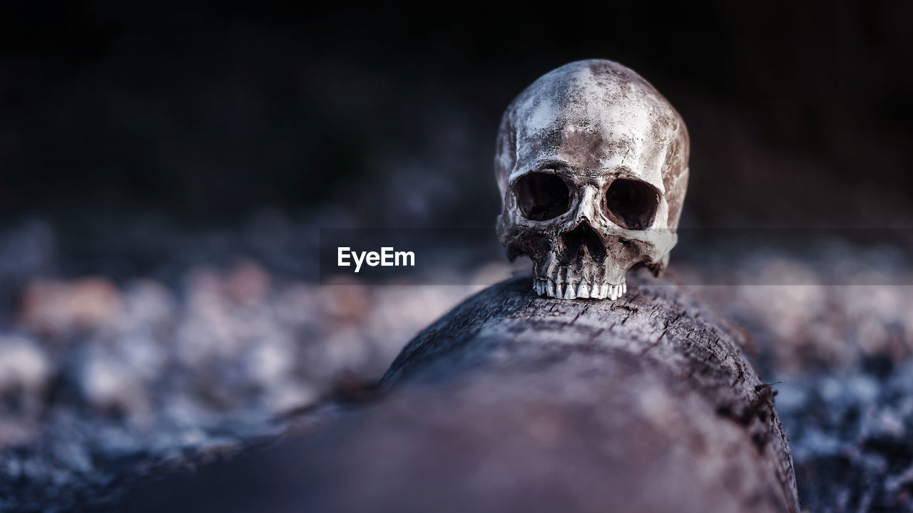 human skeleton, bone, human skull, human body part, human bone, selective focus, fear, skeleton, close-up, spooky, horror, people, the past, body part, skull, history, still life, solid, human face, depression - sadness