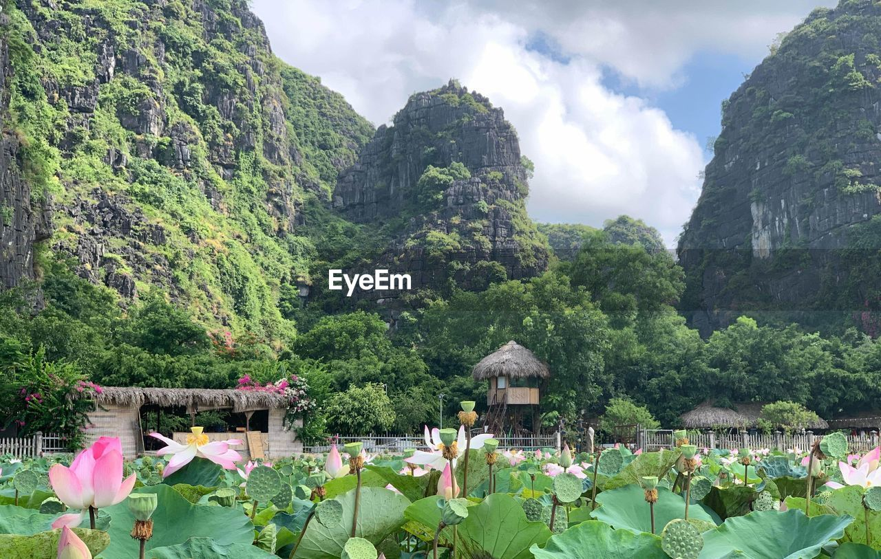 SCENIC VIEW OF MOUNTAINS BY PLANTS AGAINST SKY