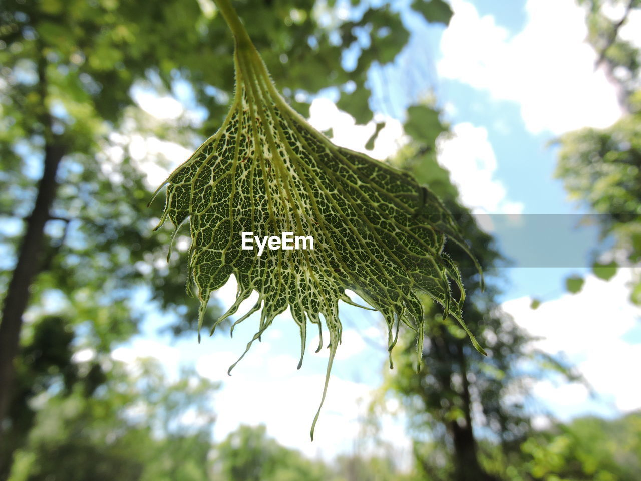 growth, low angle view, tree, nature, day, green color, outdoors, leaf, focus on foreground, branch, no people, beauty in nature, close-up, sky