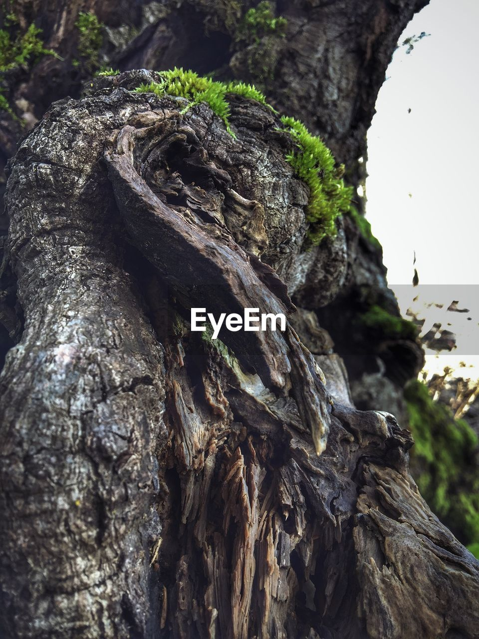 tree trunk, tree, textured, no people, bark, focus on foreground, nature, day, rough, close-up, outdoors, beauty in nature, dead tree