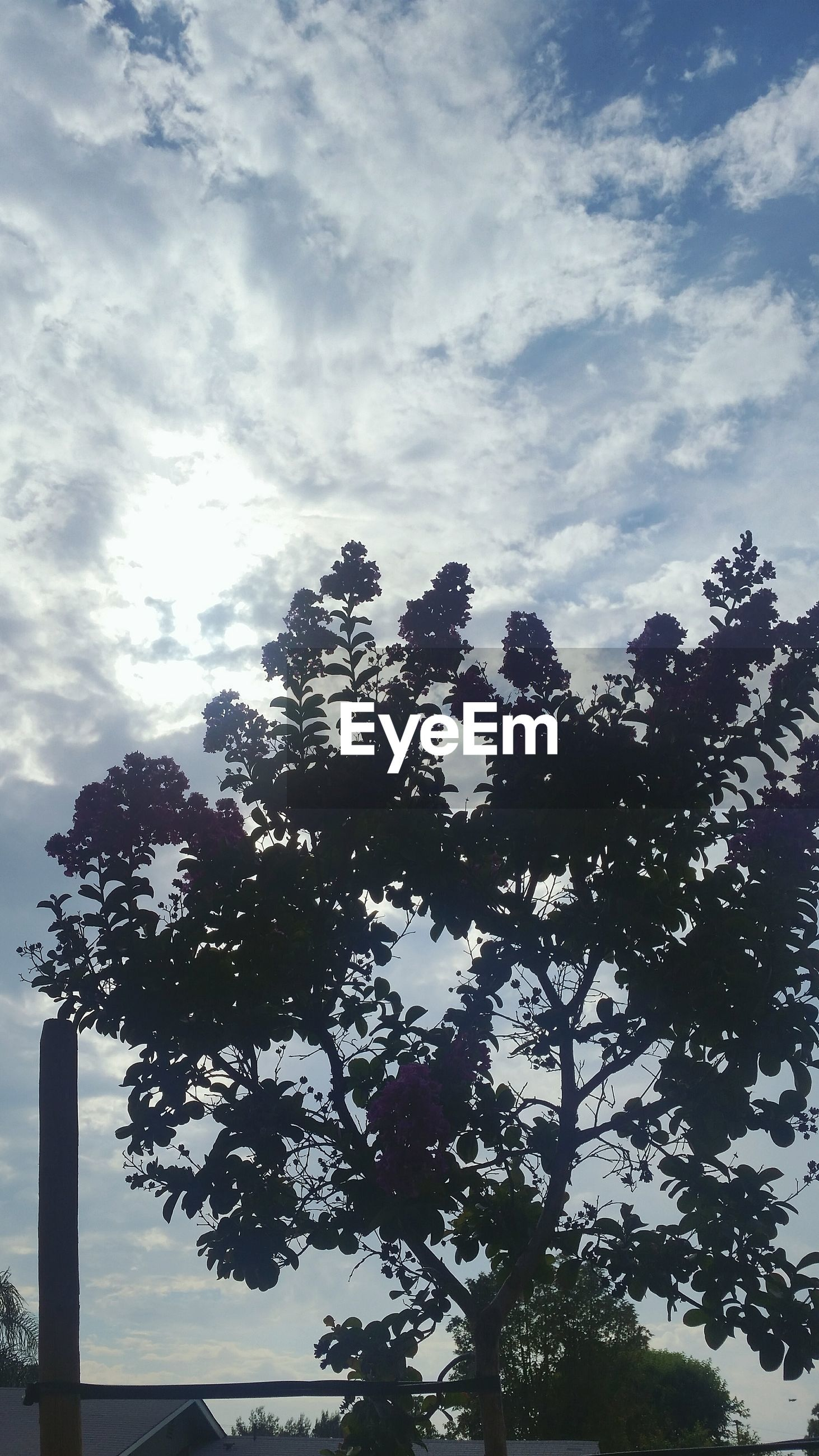 Low angle view of silhouette tree against cloudy sky
