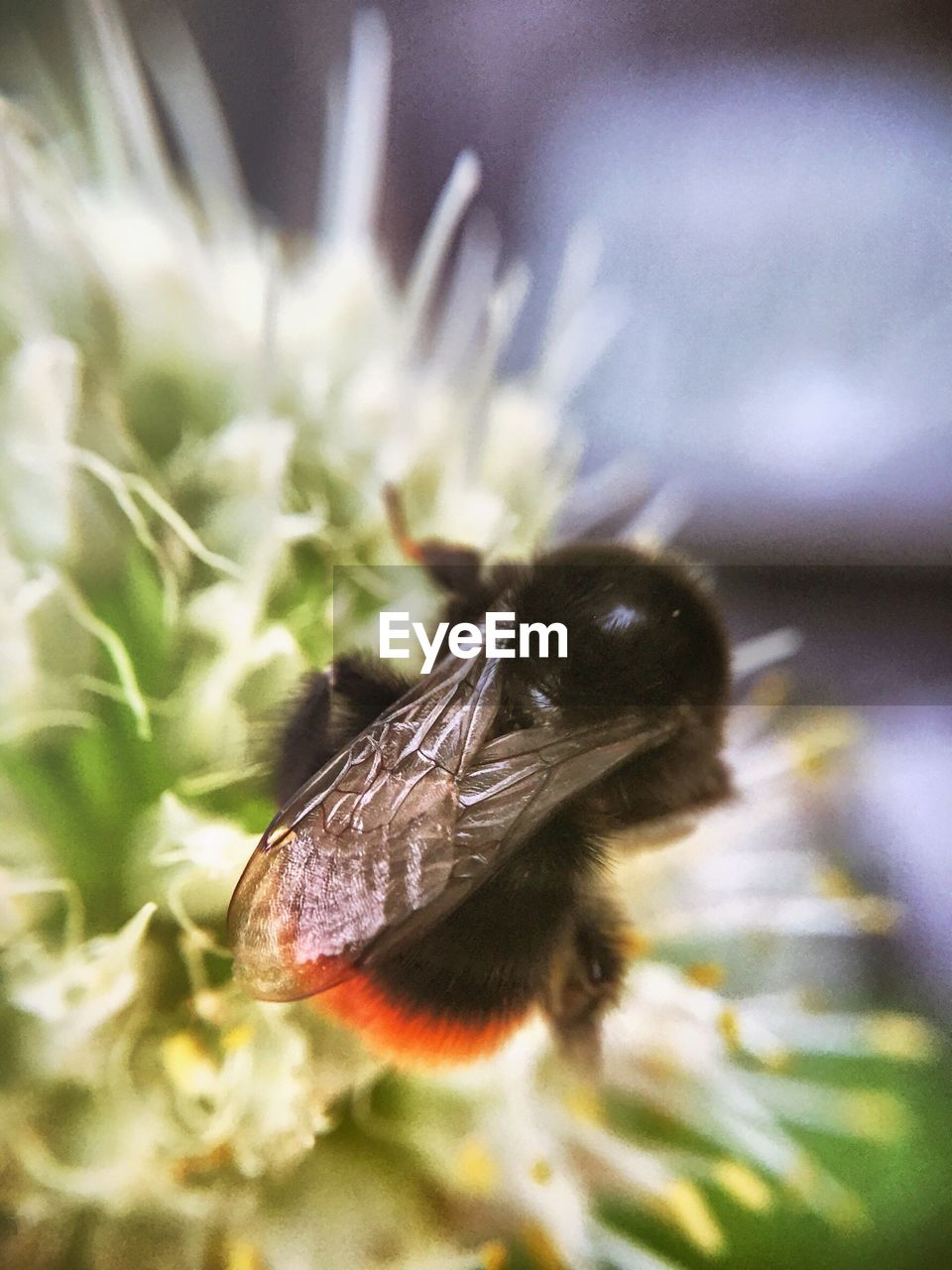 insect, animal themes, one animal, animals in the wild, wildlife, flower, nature, no people, animal wildlife, focus on foreground, pollination, plant, growth, close-up, day, outdoors, bee, beauty in nature, fragility, freshness, flower head