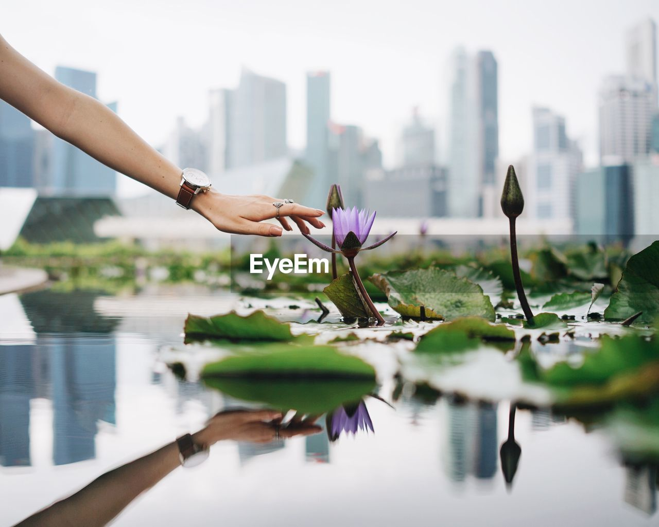 Woman Touching A Water Lily Against City Landscape