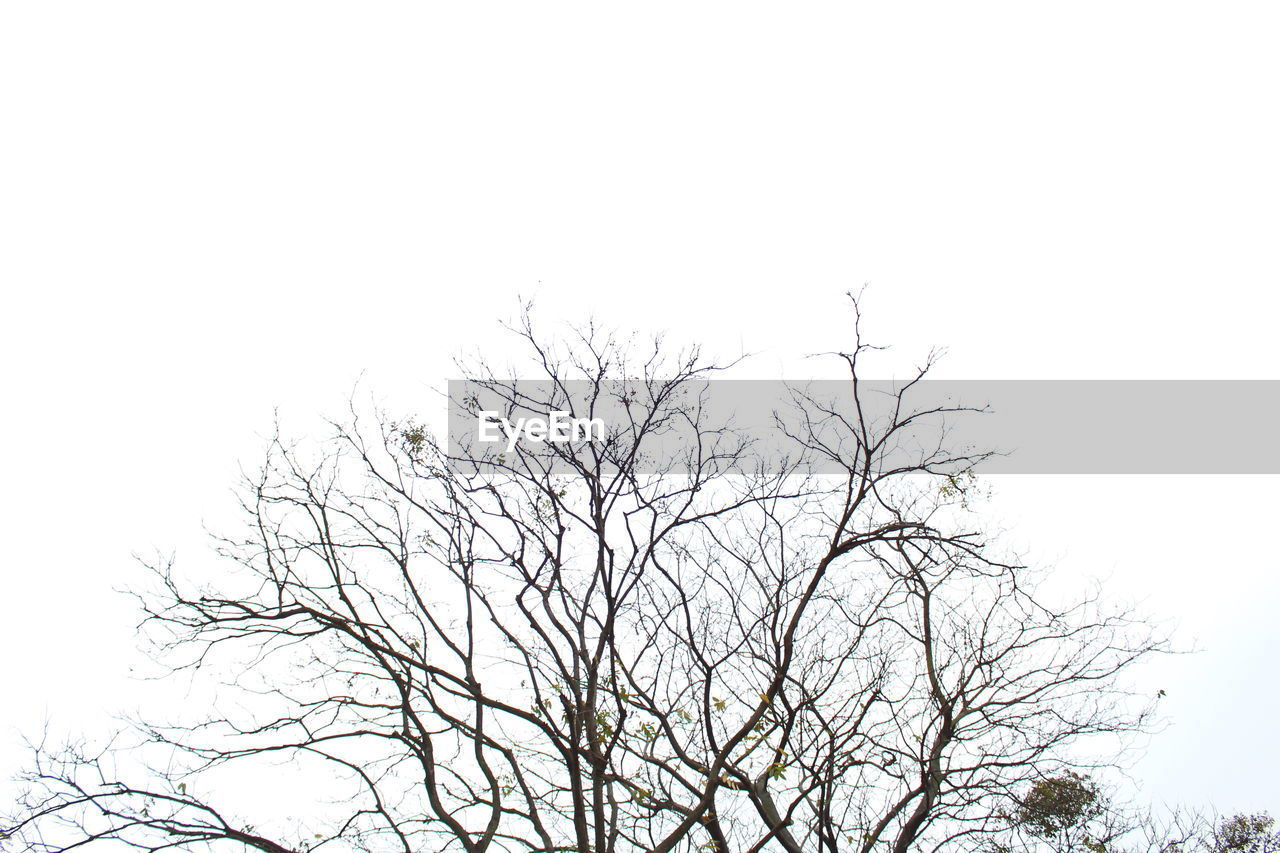 tree, sky, bare tree, low angle view, plant, branch, clear sky, no people, nature, copy space, tranquility, outdoors, day, beauty in nature, silhouette, scenics - nature, vertebrate, overcast, tranquil scene