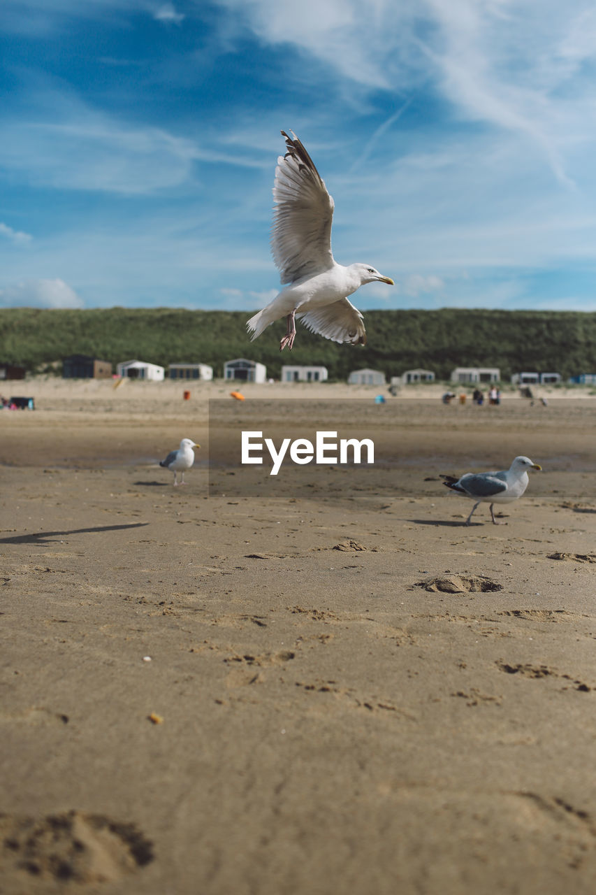 bird, animal themes, animals in the wild, flying, animal wildlife, nature, seagull, day, spread wings, sky, sea bird, large group of animals, no people, beauty in nature, outdoors, scenics, water