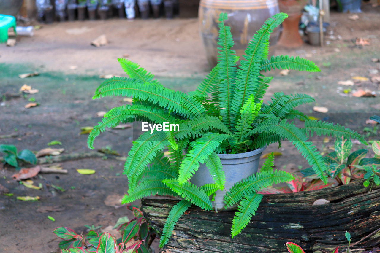 green color, plant, growth, plant part, leaf, nature, day, no people, focus on foreground, high angle view, close-up, outdoors, beauty in nature, potted plant, field, land, selective focus, natural pattern, wood - material, fern