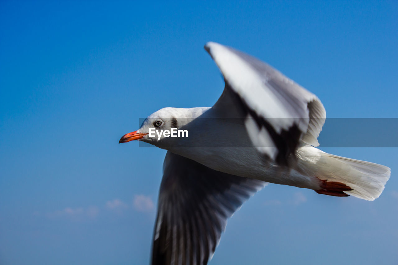 LOW ANGLE VIEW OF SEAGULL AGAINST SKY