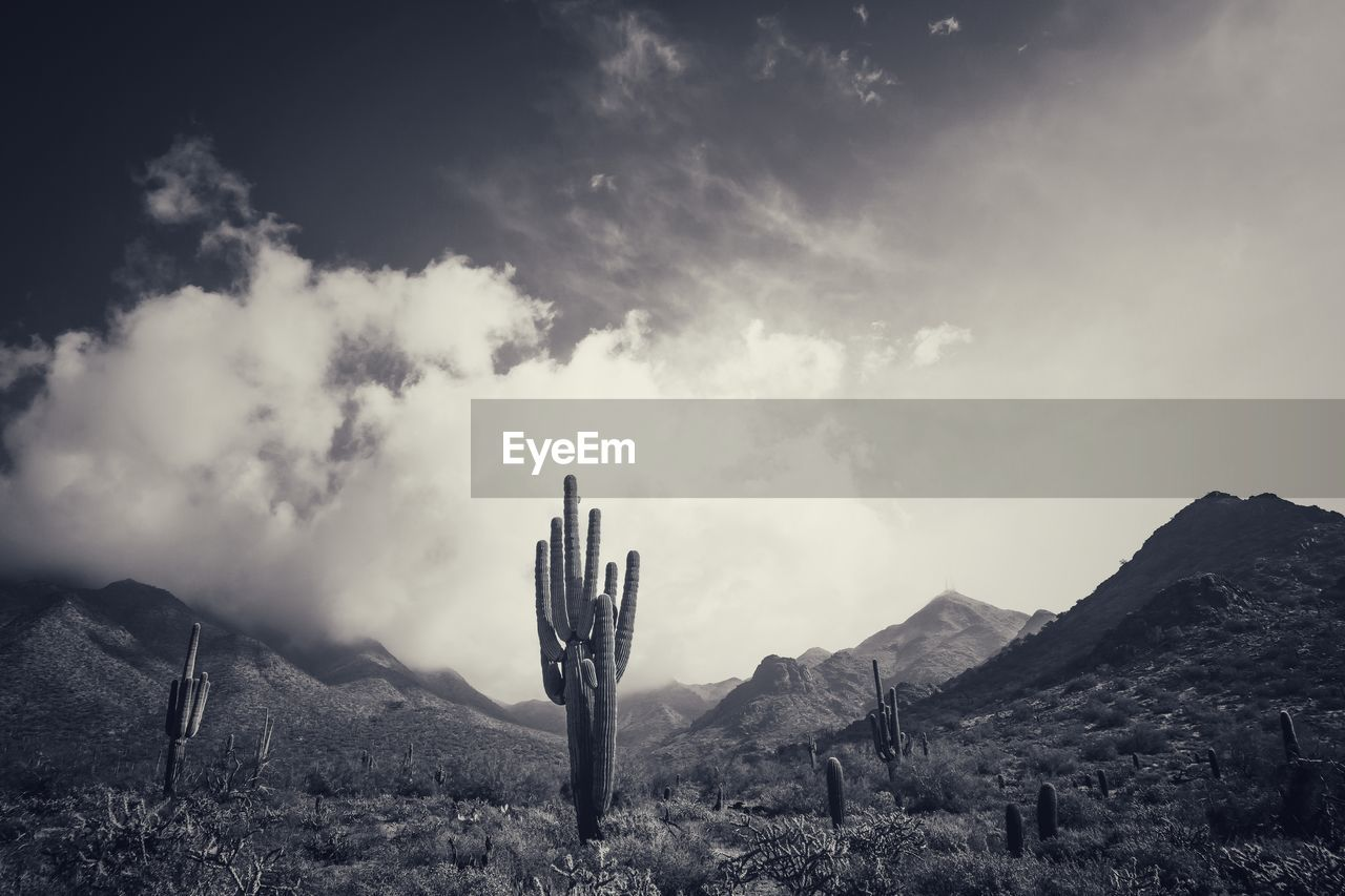 Panoramic view of cactus on mountain against sky