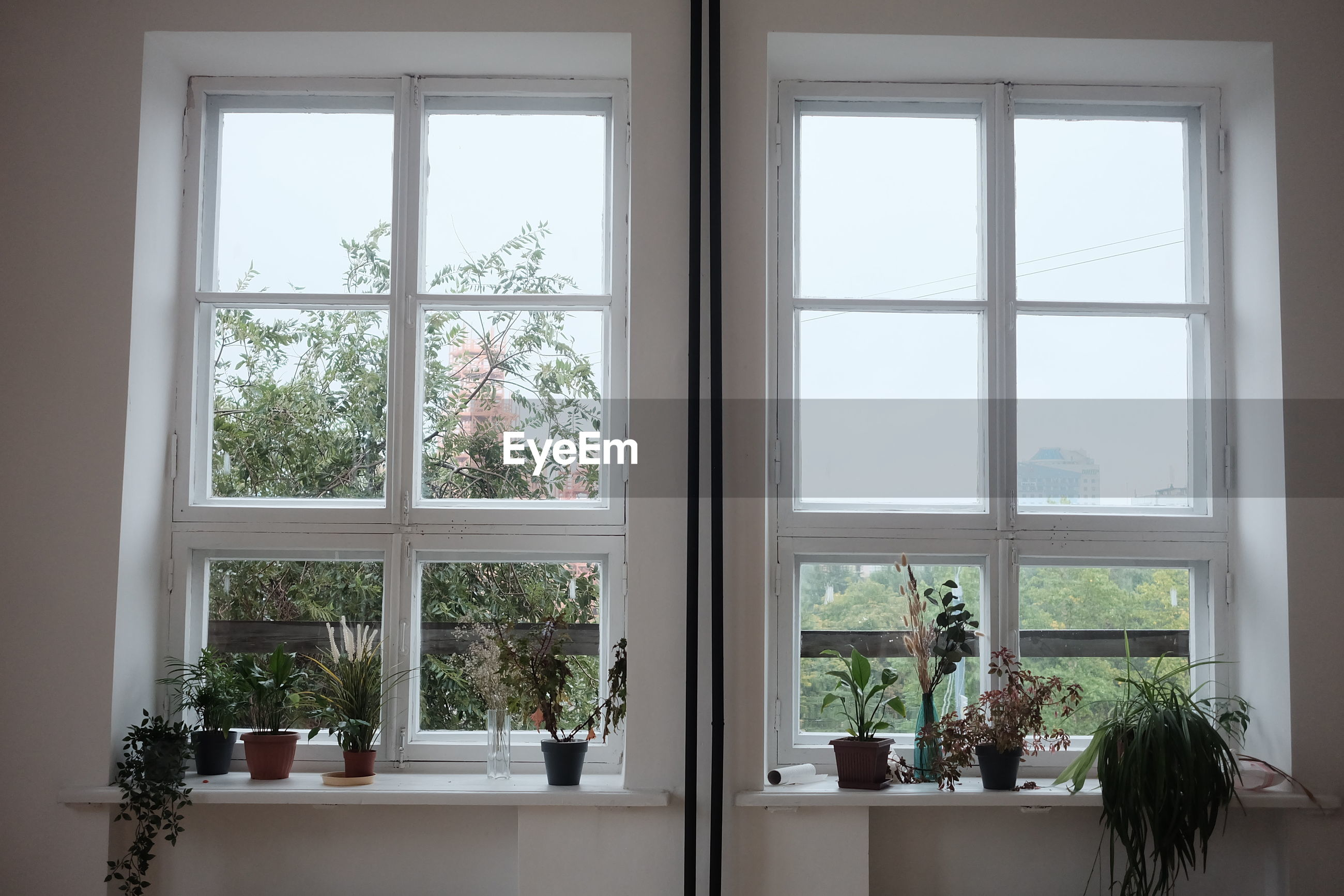POTTED PLANTS ON WINDOW