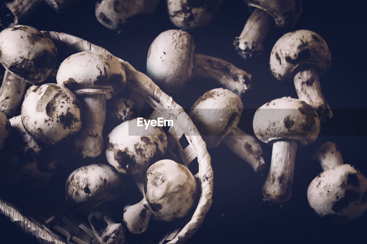 Close-up of mushrooms in bowl against black background