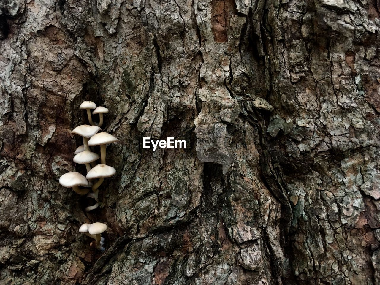 trunk, tree trunk, tree, plant, textured, mushroom, fungus, growth, nature, close-up, no people, food, plant bark, vegetable, full frame, day, rough, backgrounds, beauty in nature, bark, outdoors, toadstool, lichen, textured effect