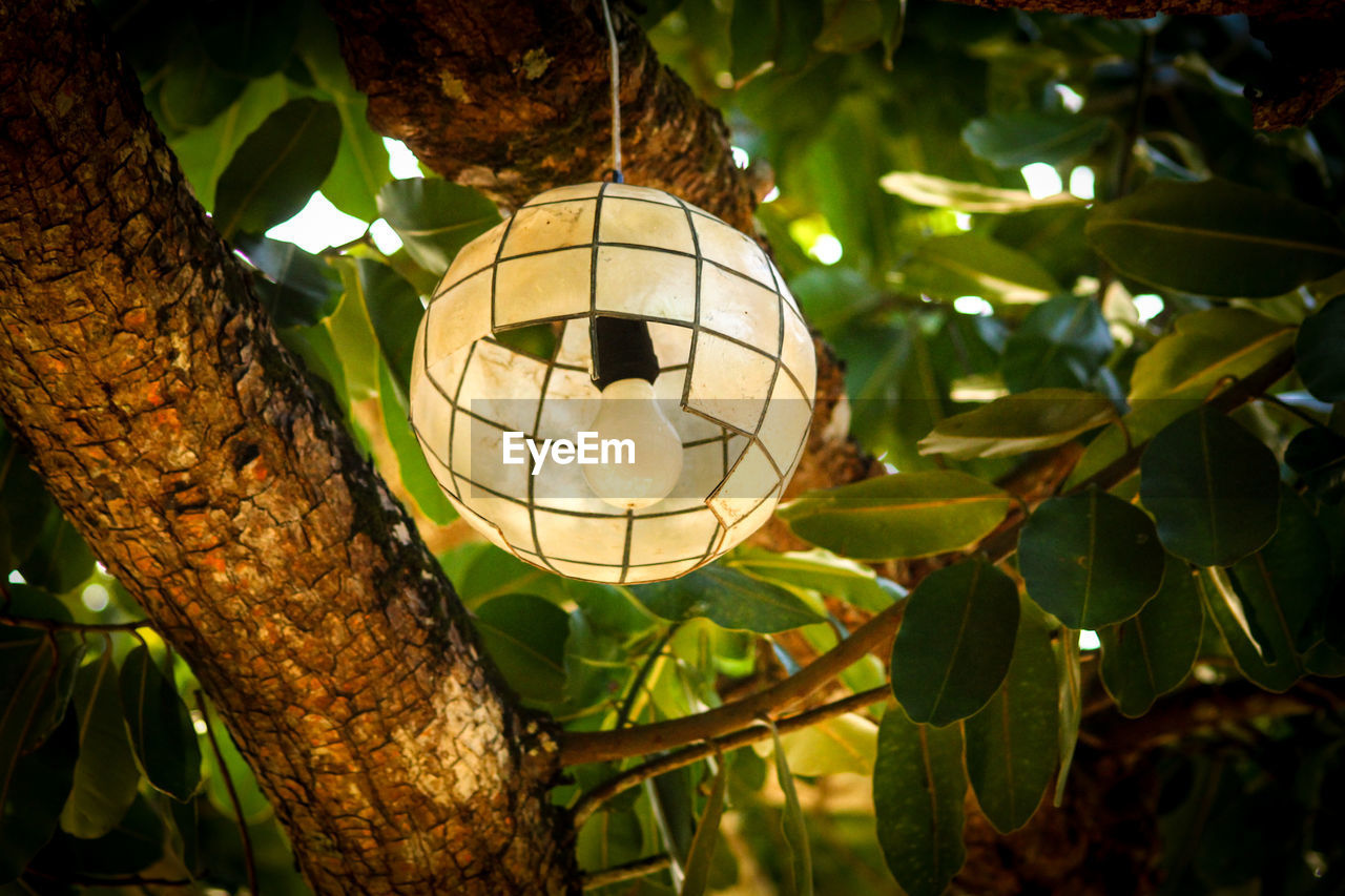tree, leaf, plant part, focus on foreground, plant, hanging, low angle view, no people, close-up, nature, lighting equipment, branch, outdoors, growth, day, decoration, green color, sphere, geometric shape, illuminated