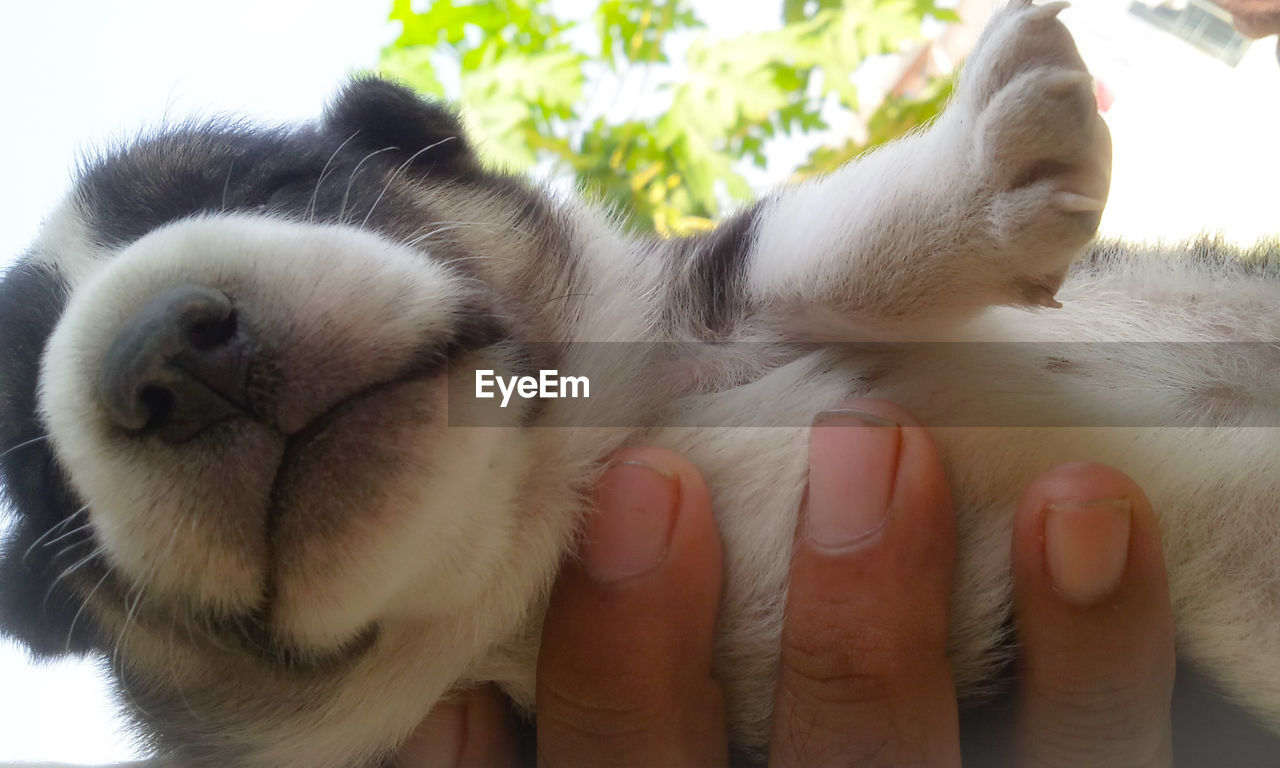 pets, human hand, human body part, animal themes, one animal, domestic animals, mammal, real people, one person, human finger, holding, dog, domestic cat, close-up, feline, lifestyles, day, outdoors, friendship, nature, people