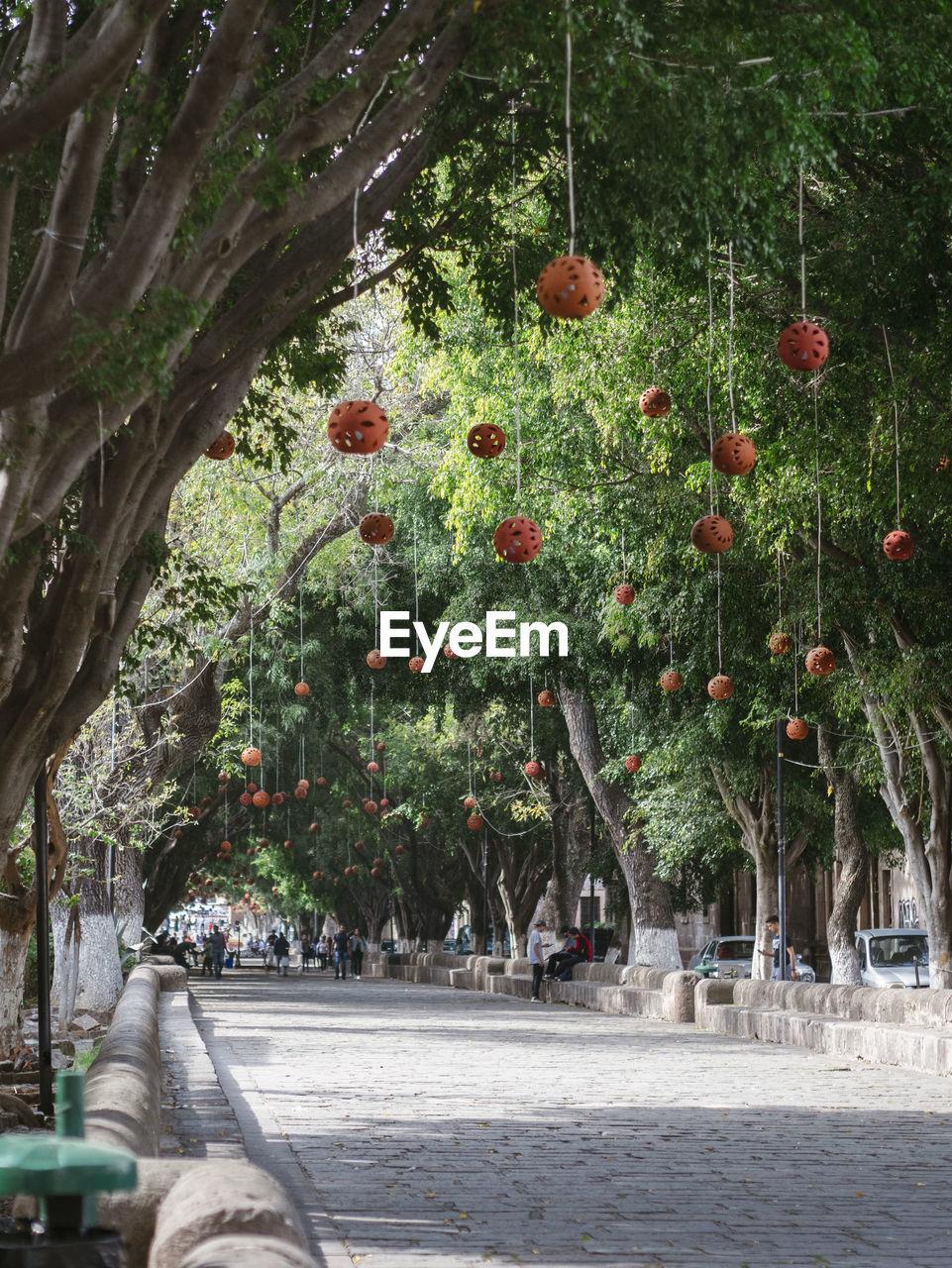 VIEW OF FRUIT TREE
