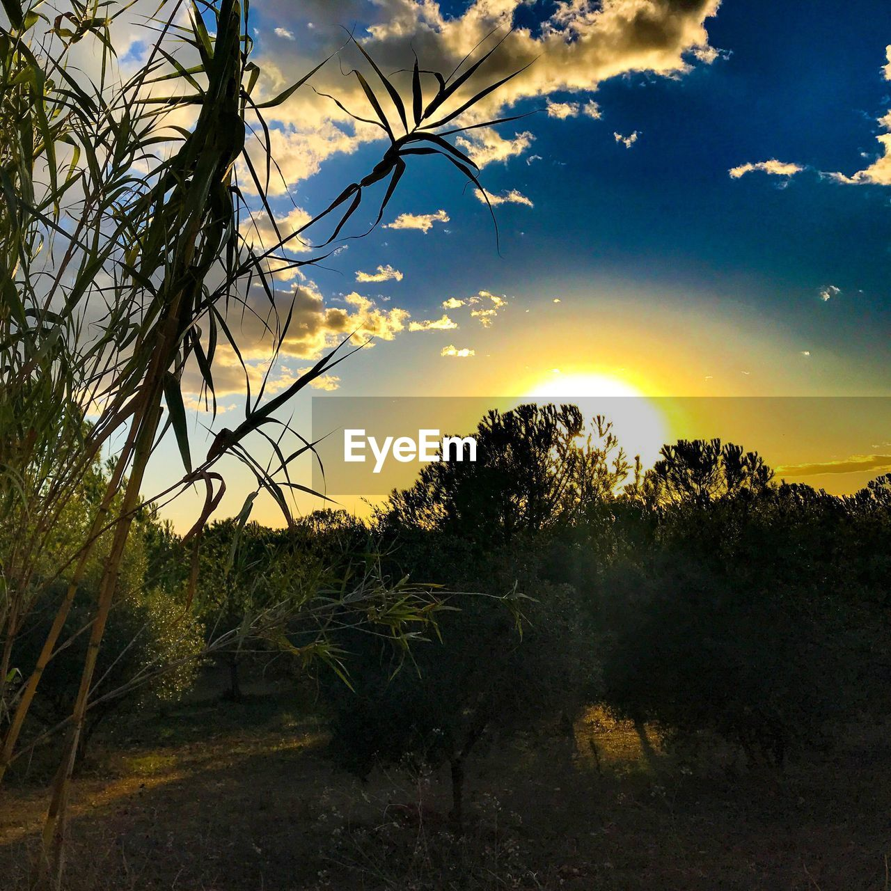 tree, growth, nature, beauty in nature, tranquility, tranquil scene, no people, sky, scenics, outdoors, landscape, plant, sunset, day