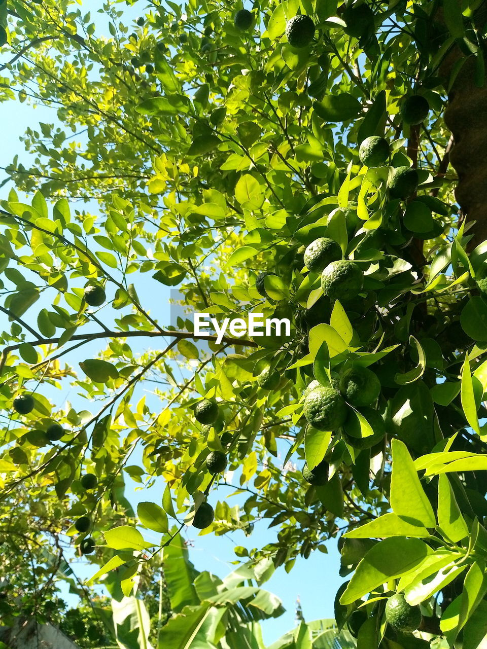 growth, tree, plant, green color, leaf, plant part, low angle view, beauty in nature, no people, sunlight, day, nature, branch, outdoors, tranquility, backgrounds, full frame, food and drink, healthy eating, freshness, tree canopy