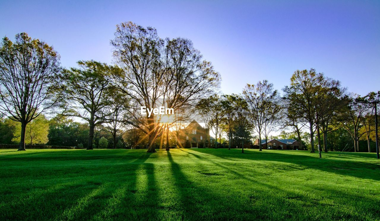 Trees growing on grassy field during sunset