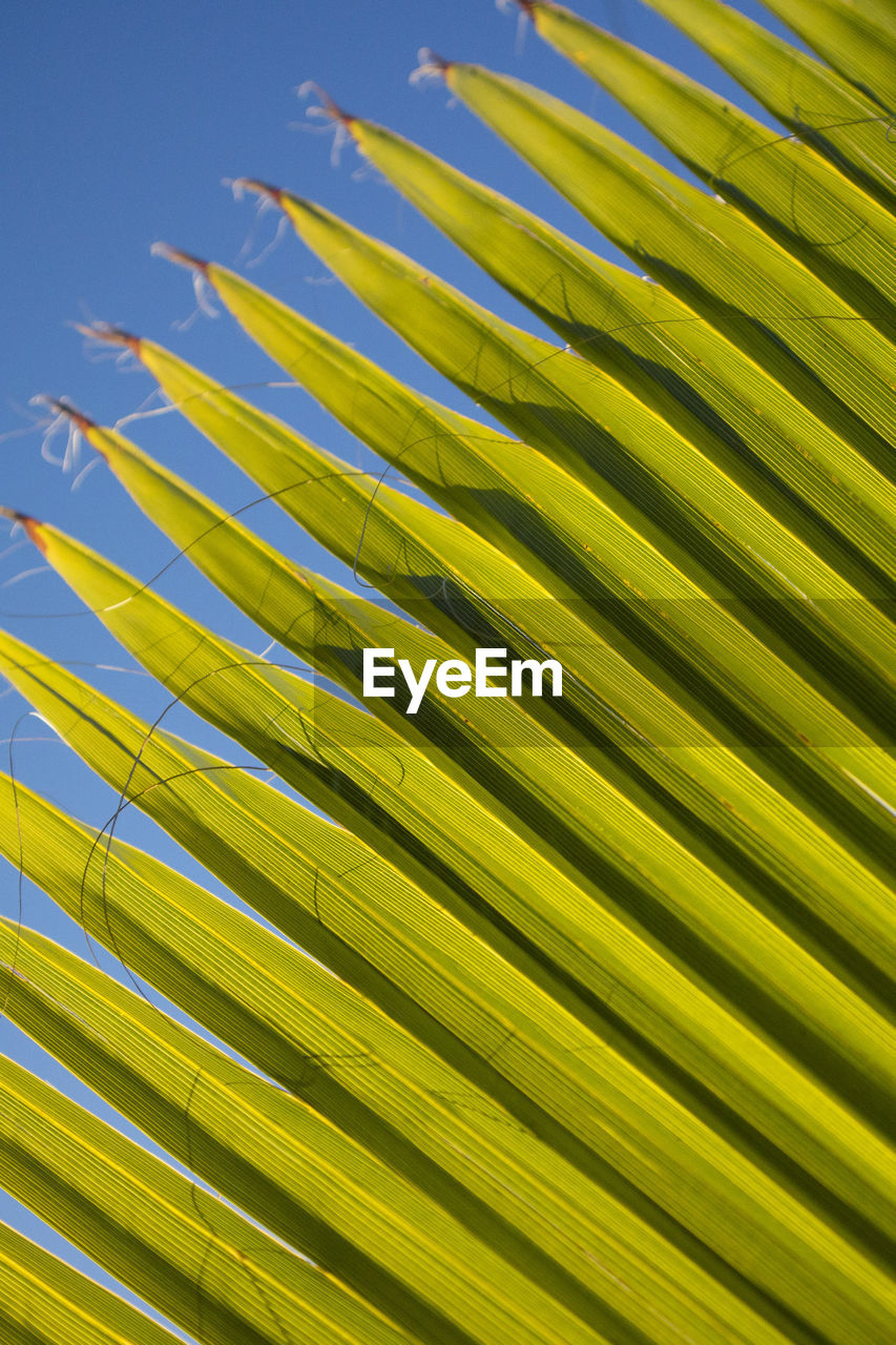 palm tree, growth, leaf, no people, pattern, palm leaf, backgrounds, plant part, frond, close-up, beauty in nature, natural pattern, nature, yellow, full frame, green color, plant, tropical climate, tree, day, outdoors, leaves