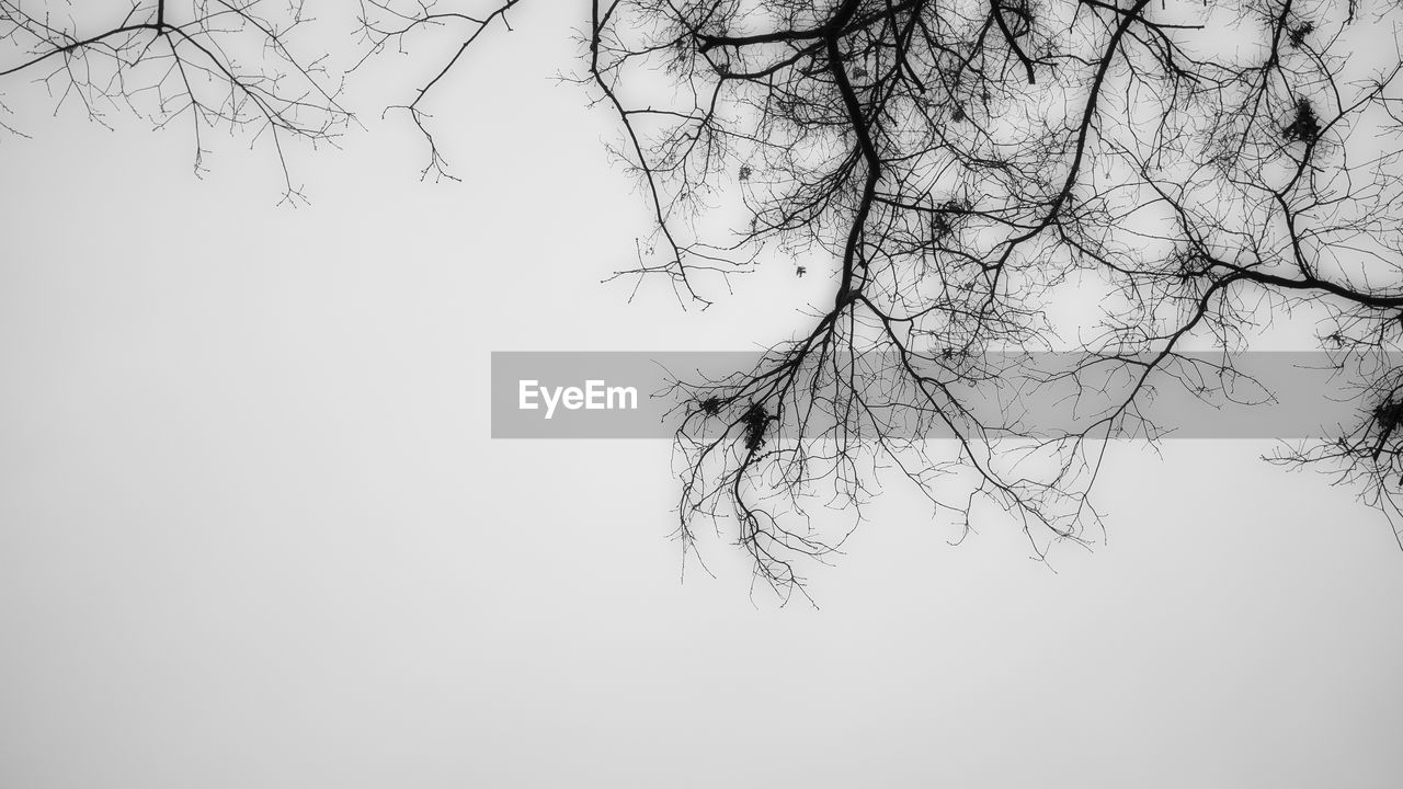 bare tree, branch, clear sky, nature, beauty in nature, tree, day, outdoors, no people, sky