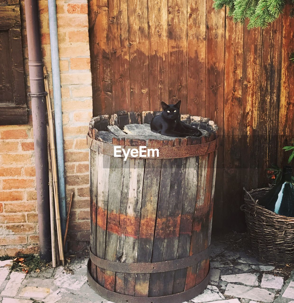 barrel, no people, day, animal themes, outdoors, wine cask
