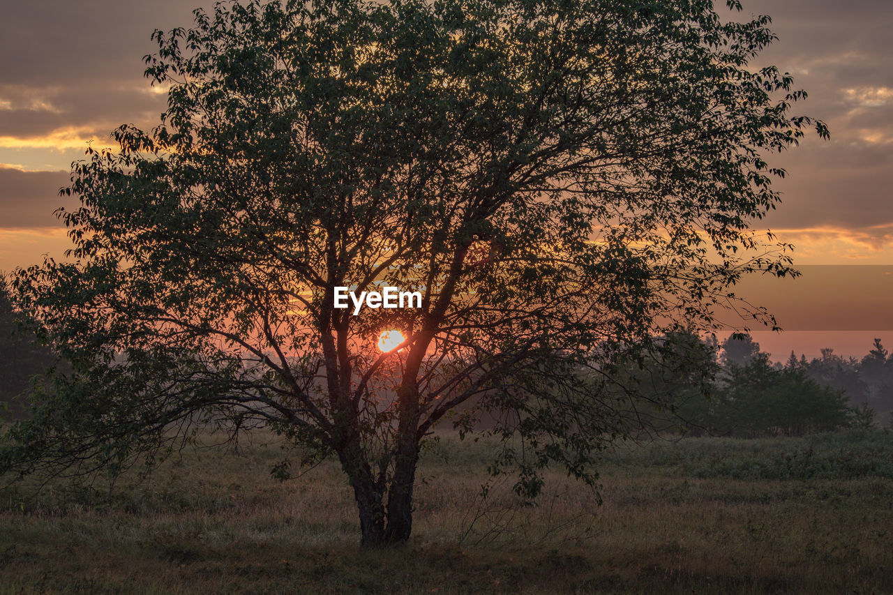 tree, sky, sunset, plant, nature, beauty in nature, growth, tranquility, landscape, sun, land, environment, outdoors, scenics - nature, field, tranquil scene, no people, non-urban scene, cloud - sky, grass