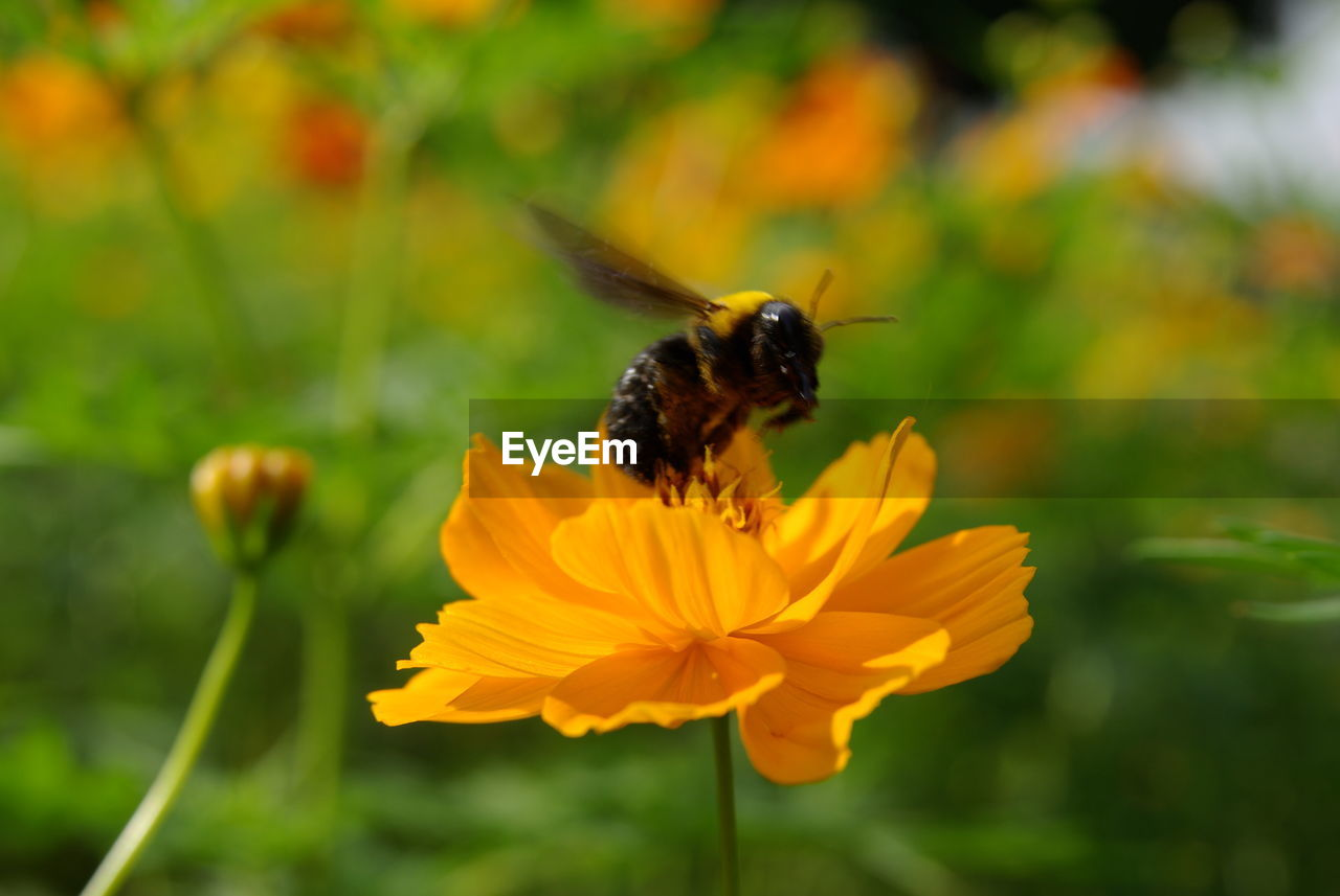 flowering plant, flower, petal, animal themes, animals in the wild, animal wildlife, flower head, beauty in nature, fragility, animal, plant, freshness, vulnerability, growth, invertebrate, one animal, insect, inflorescence, close-up, pollination, yellow, pollen, no people, butterfly - insect