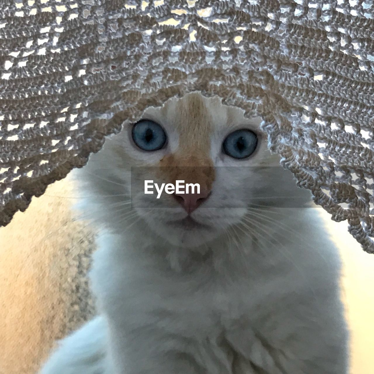 one animal, animal themes, animal, cat, domestic cat, mammal, vertebrate, domestic, close-up, pets, no people, feline, portrait, looking at camera, animal body part, domestic animals, animal head, white color, looking, whisker, animal eye