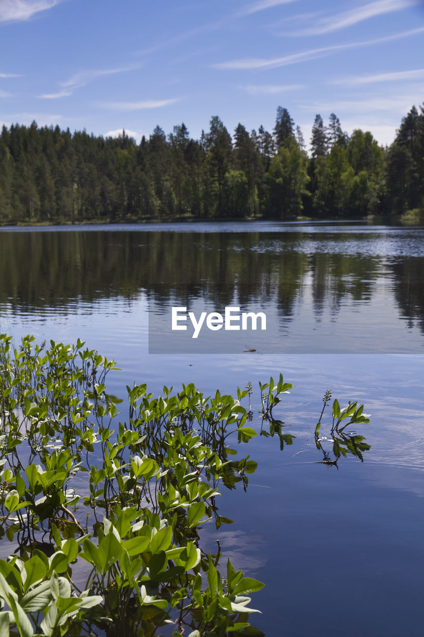 tree, nature, water, growth, lake, beauty in nature, tranquility, reflection, plant, no people, leaf, scenics, flower, tranquil scene, outdoors, floating on water, day, sky, lily pad, lotus water lily, fragility, freshness
