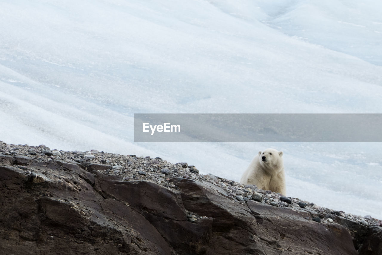 Low Angle View Of Polar Bear On Mountain