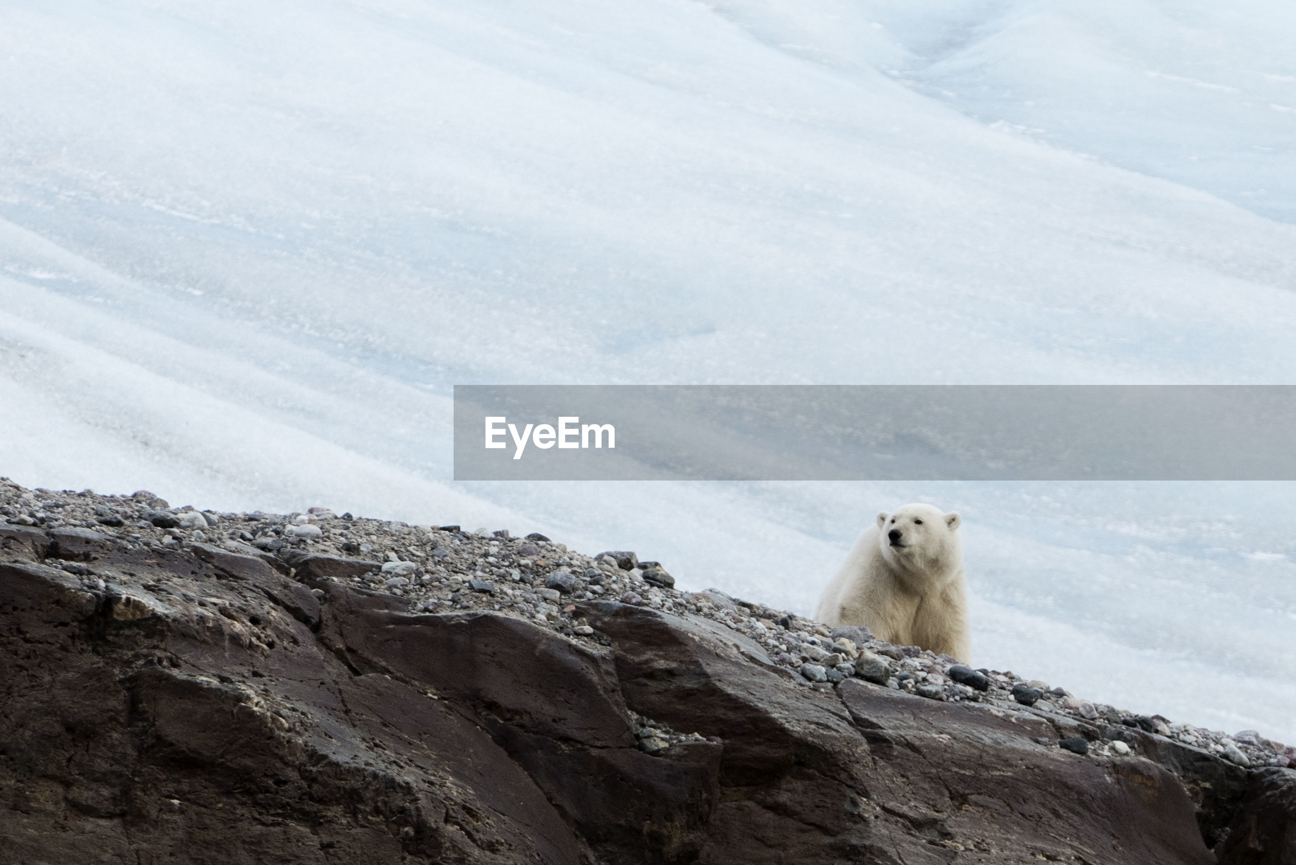 Low angle view of polar bear on mountain