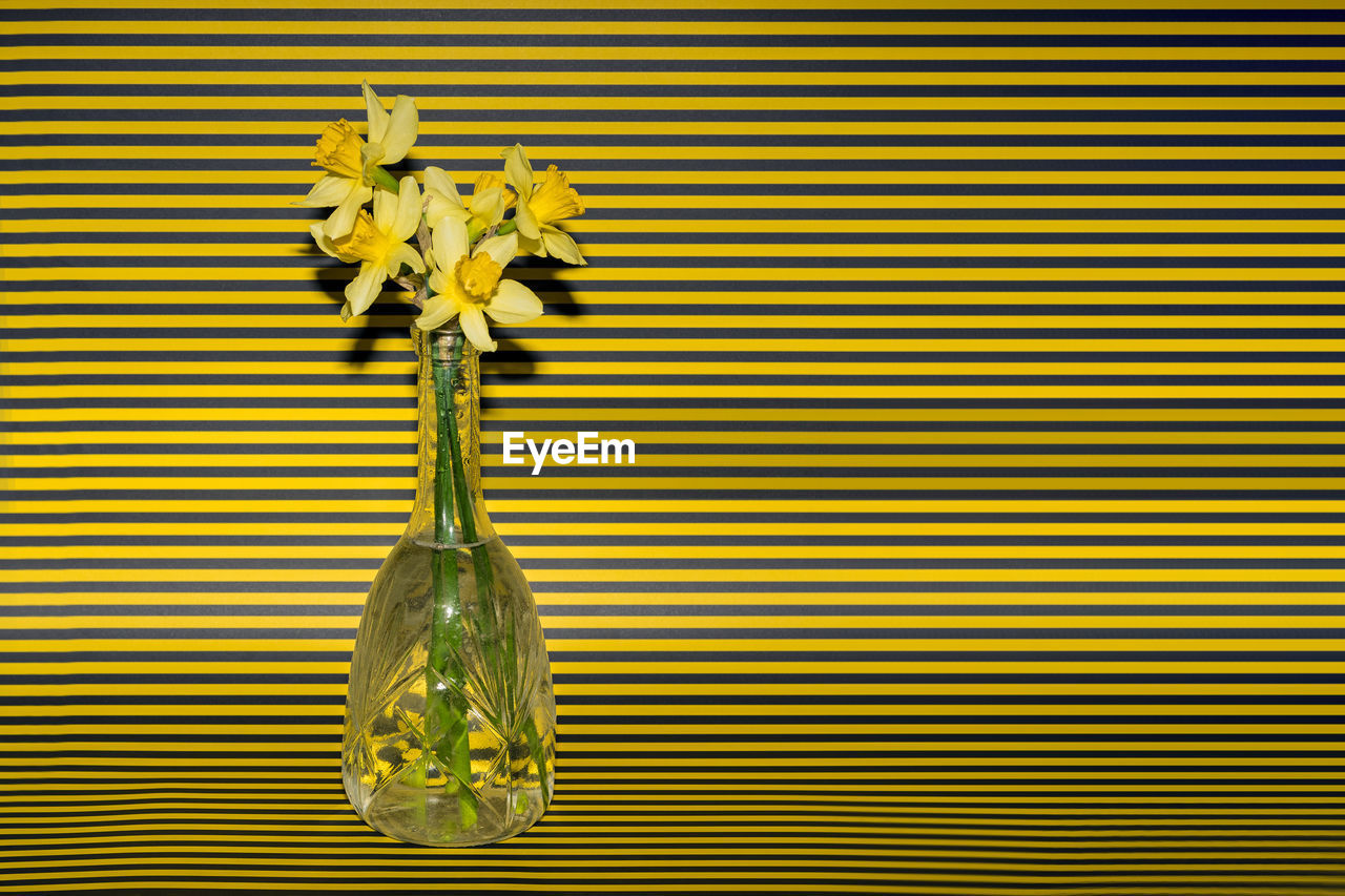 yellow, flower, plant, no people, flowering plant, vase, nature, freshness, indoors, striped, close-up, decoration, beauty in nature, gold colored, pattern, leaf, vulnerability, creativity, flower head