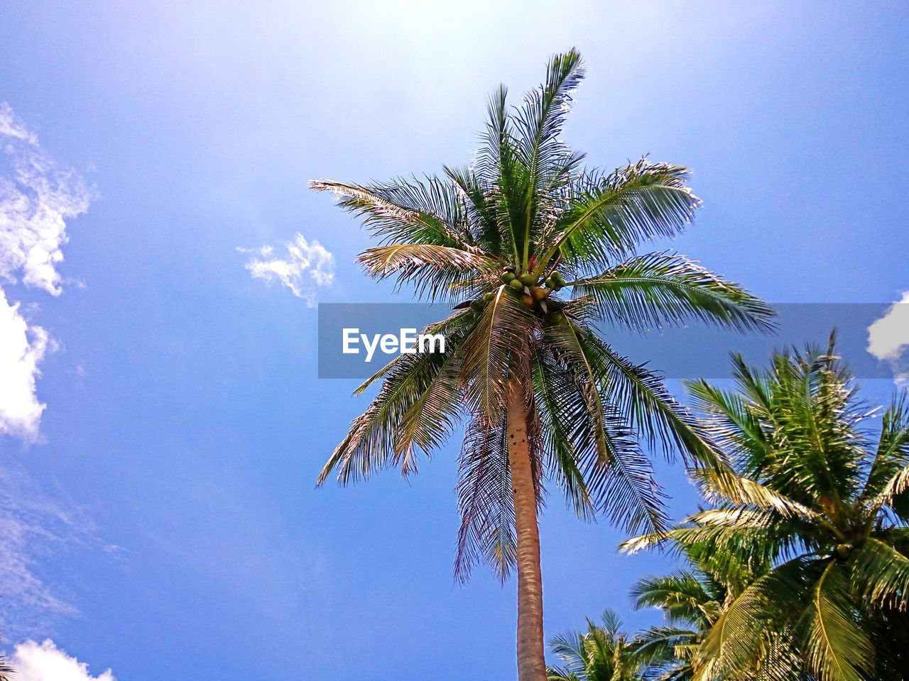 palm tree, tree, low angle view, sky, nature, beauty in nature, growth, scenics, day, no people, palm frond, tranquility, outdoors, blue