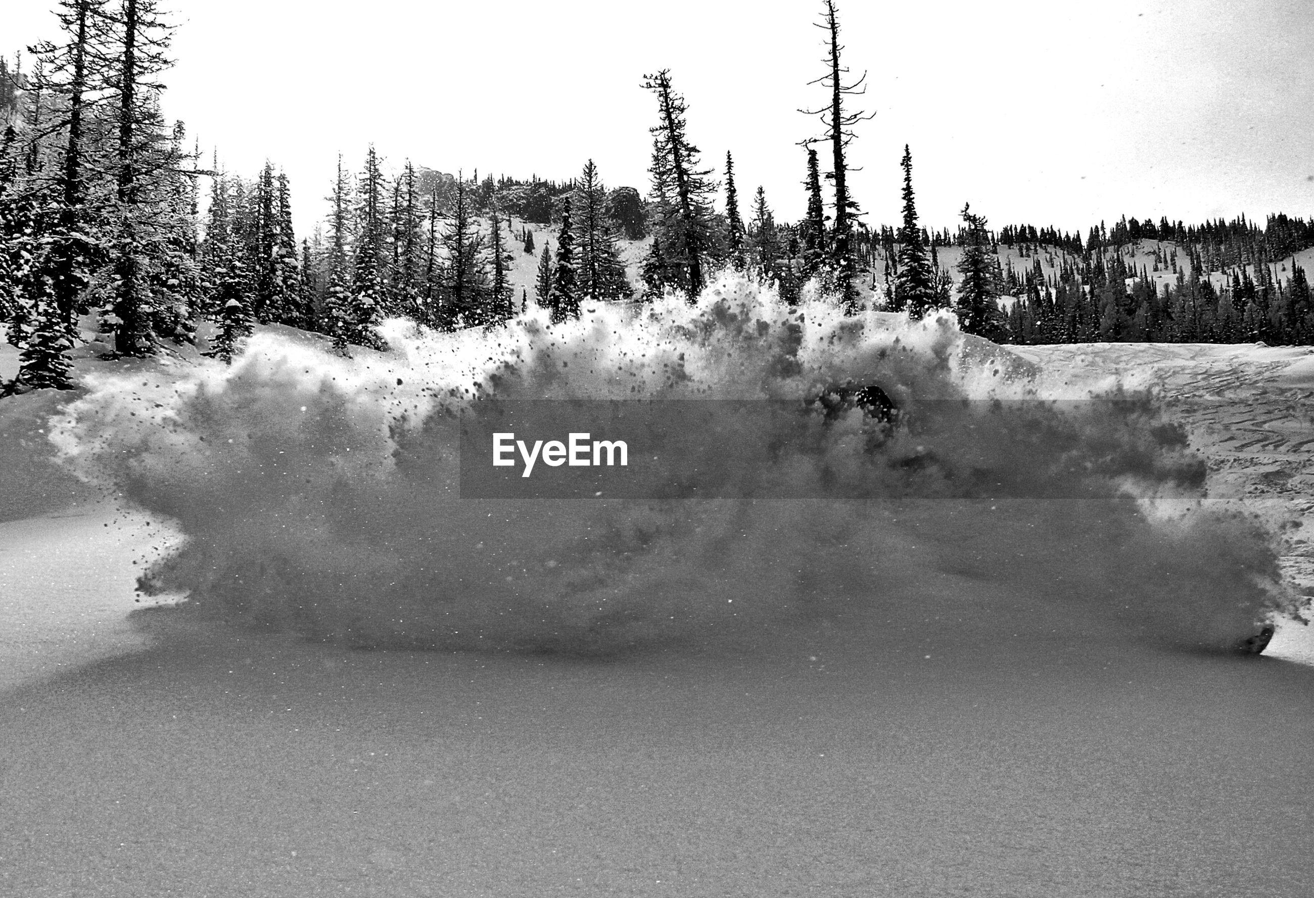 Snow exploding against pine trees