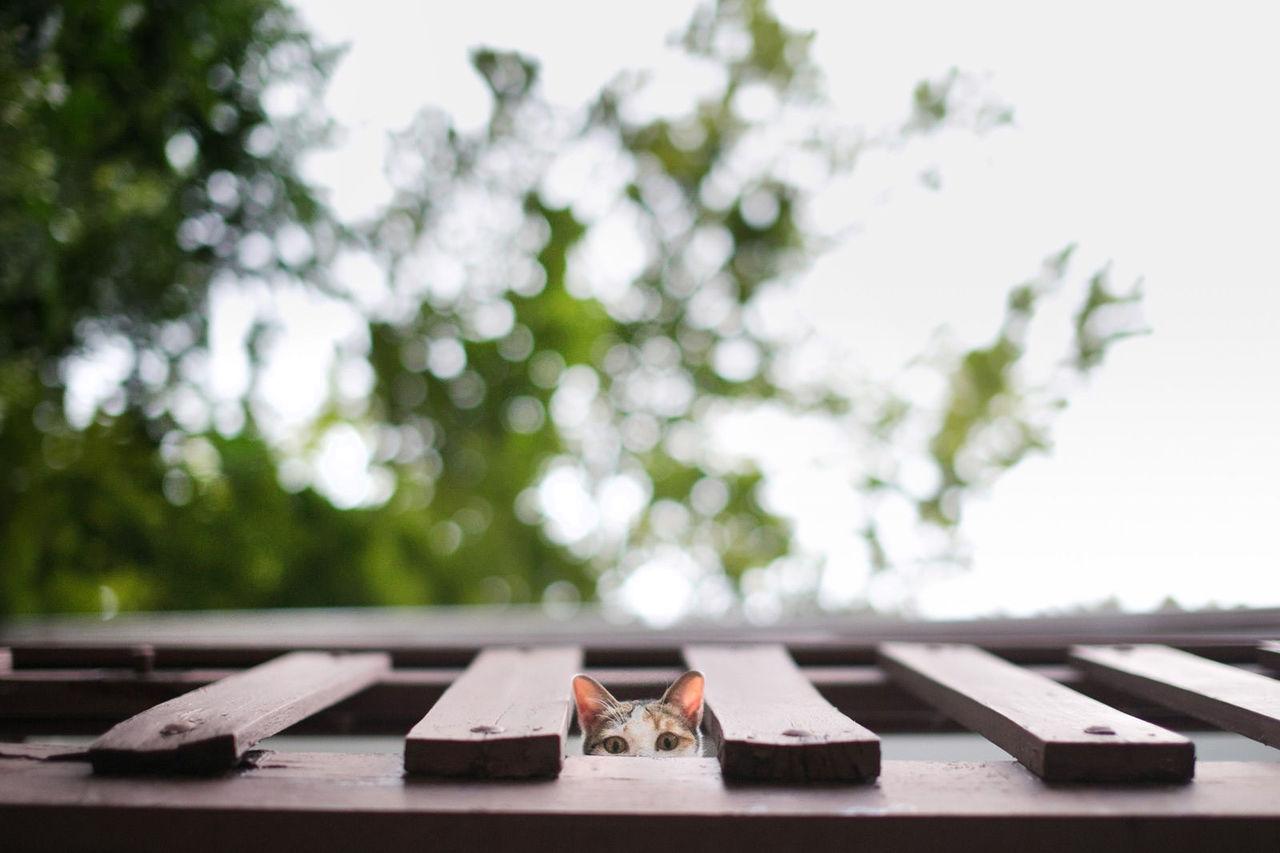 View Of Cat Peeping Through Wooden Railing
