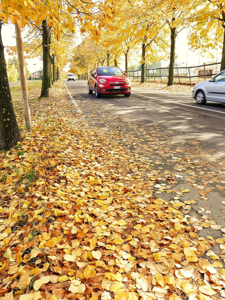 change, autumn, leaf, car, tree, land vehicle, transportation, mode of transport, fallen, dry, nature, outdoors, day, stationary, beauty in nature, no people, red, yellow