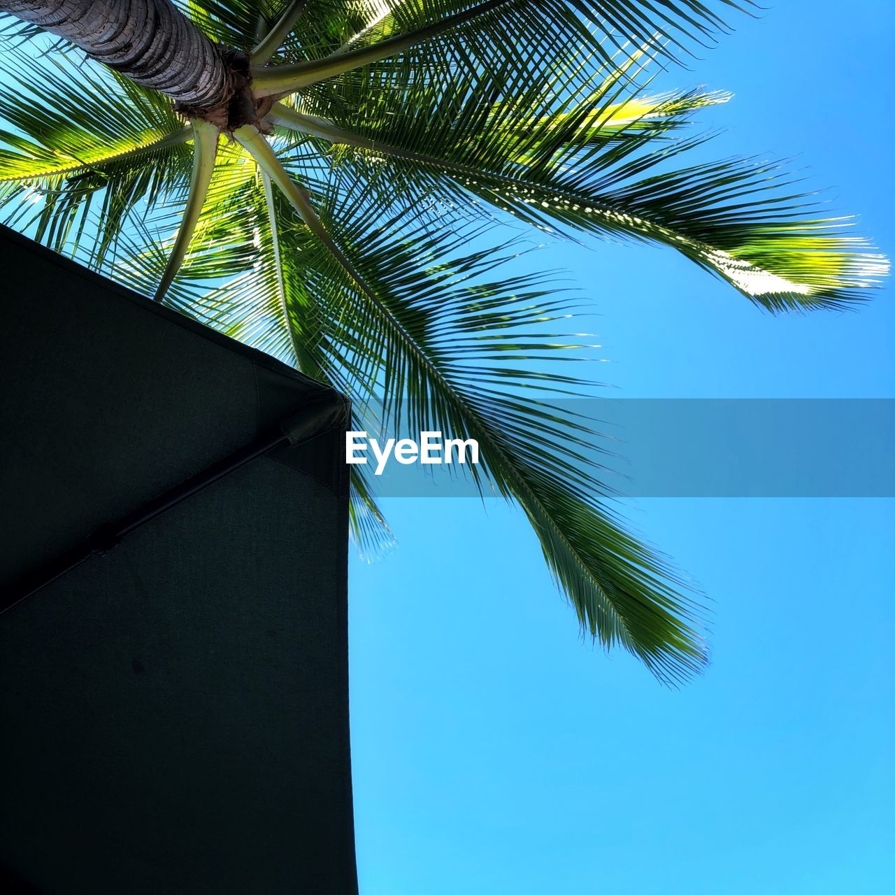 palm tree, leaf, tree, tropical climate, plant, low angle view, palm leaf, growth, sky, nature, no people, plant part, blue, green color, beauty in nature, day, clear sky, coconut palm tree, outdoors, close-up, tropical tree, directly below