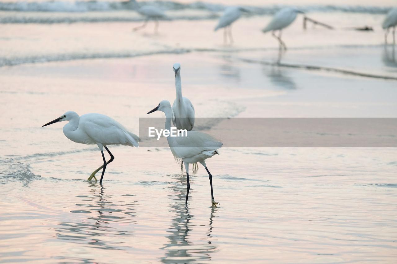 Birds perching by lake