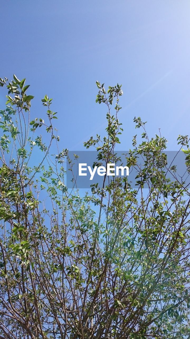 growth, nature, low angle view, beauty in nature, blue, clear sky, tree, no people, plant, flower, branch, outdoors, day, sky, freshness, fragility