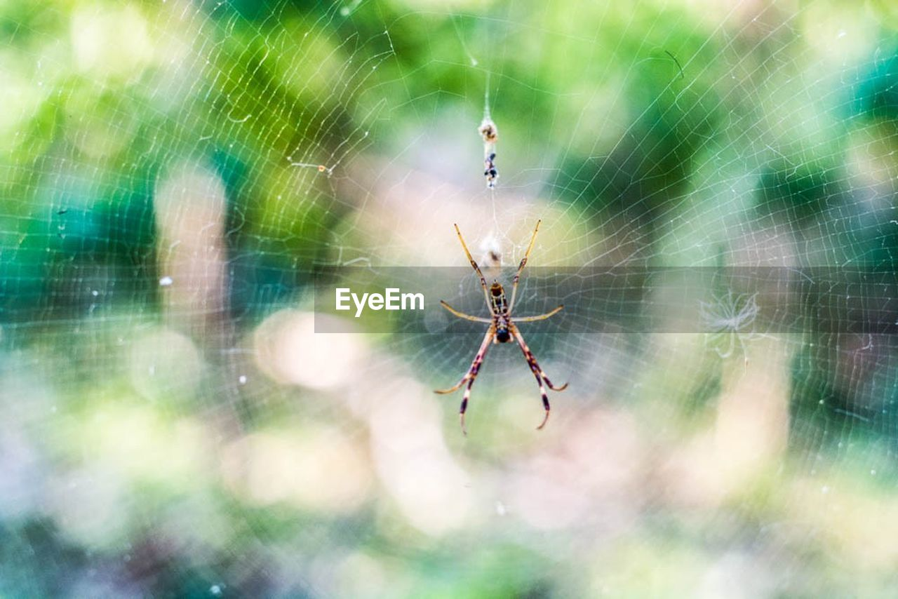 spider, spider web, one animal, animal themes, web, insect, focus on foreground, animals in the wild, nature, outdoors, day, survival, close-up, no people, animal wildlife, full length, fragility, animal leg