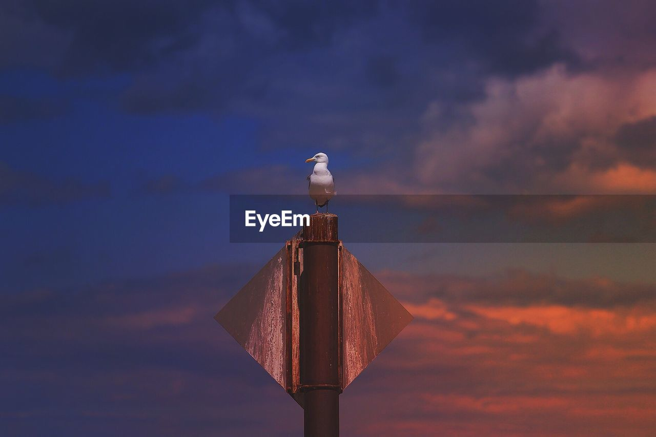 Low Angle View Of Seagull Perching On Pole Against Sky During Sunset