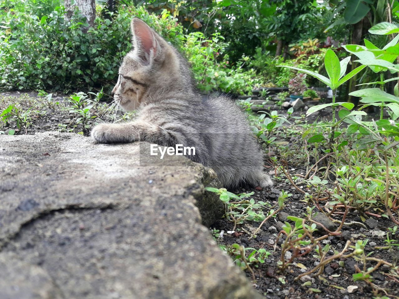 cat, mammal, domestic cat, animal themes, feline, domestic, animal, pets, one animal, domestic animals, vertebrate, plant, no people, nature, relaxation, day, field, land, sitting, plant part, whisker, tabby
