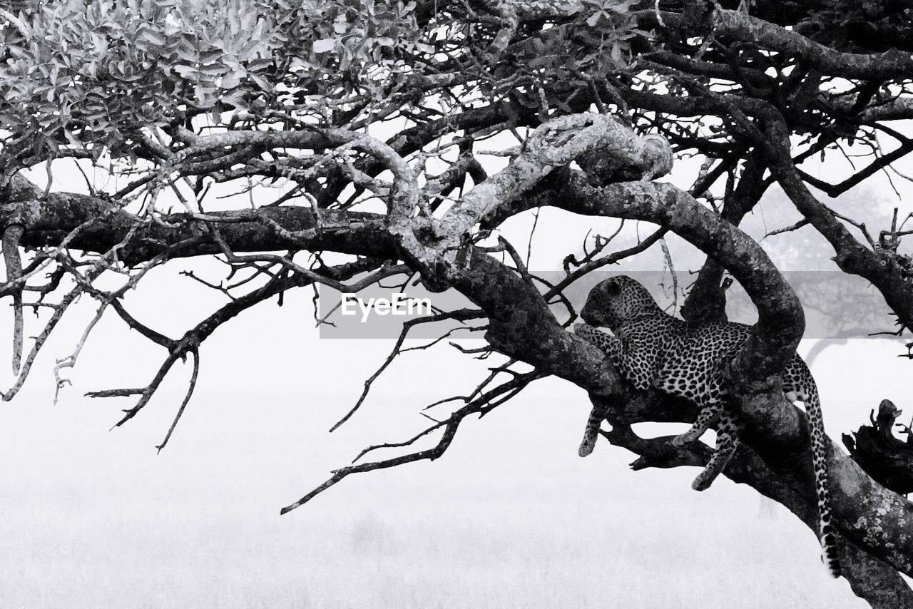 tree, branch, plant, animals in the wild, animal, animal wildlife, animal themes, vertebrate, no people, one animal, day, nature, low angle view, perching, bird, outdoors, mammal, growth, tree trunk, trunk
