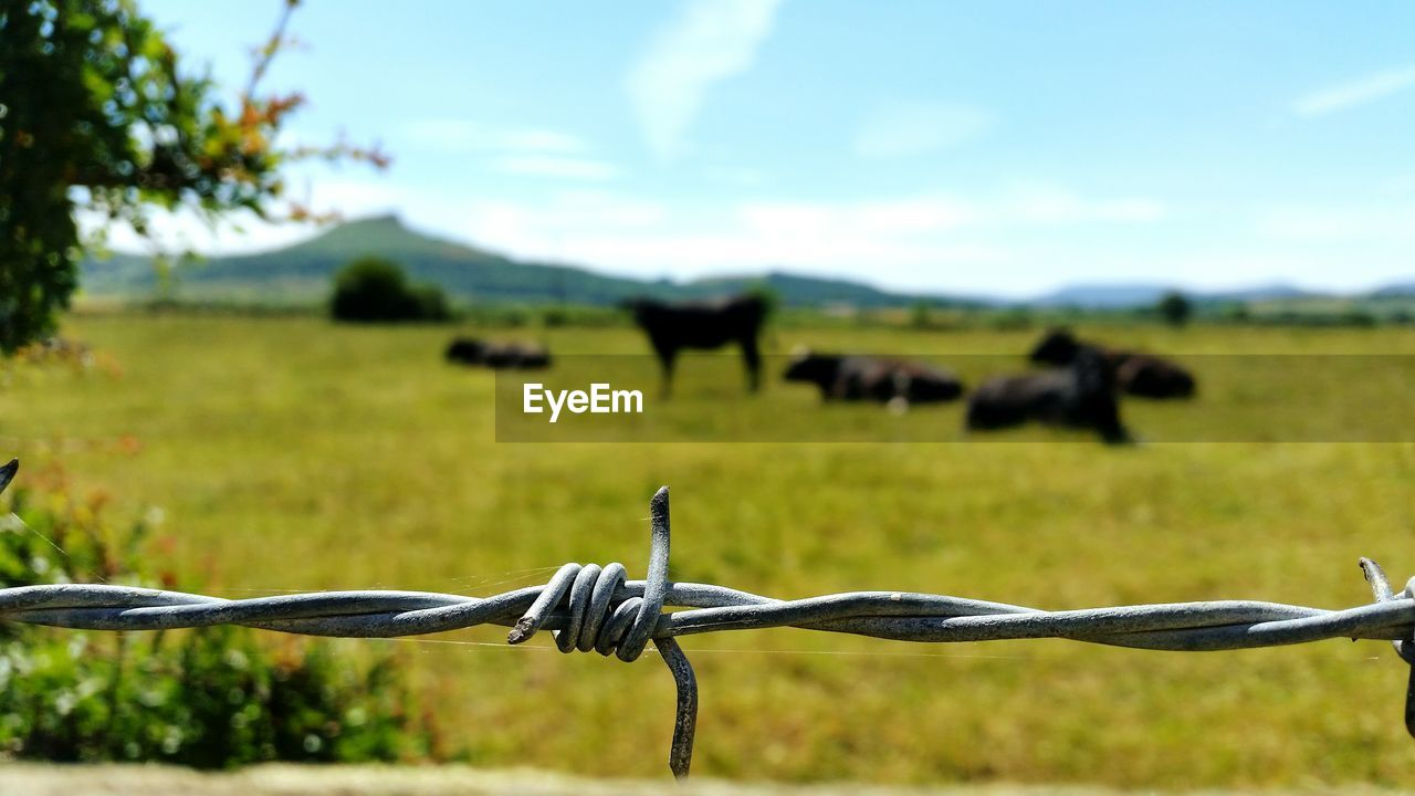 fence, landscape, field, barrier, boundary, focus on foreground, nature, land, day, no people, metal, barbed wire, plant, sky, animal themes, safety, security, protection, environment, animal, outdoors