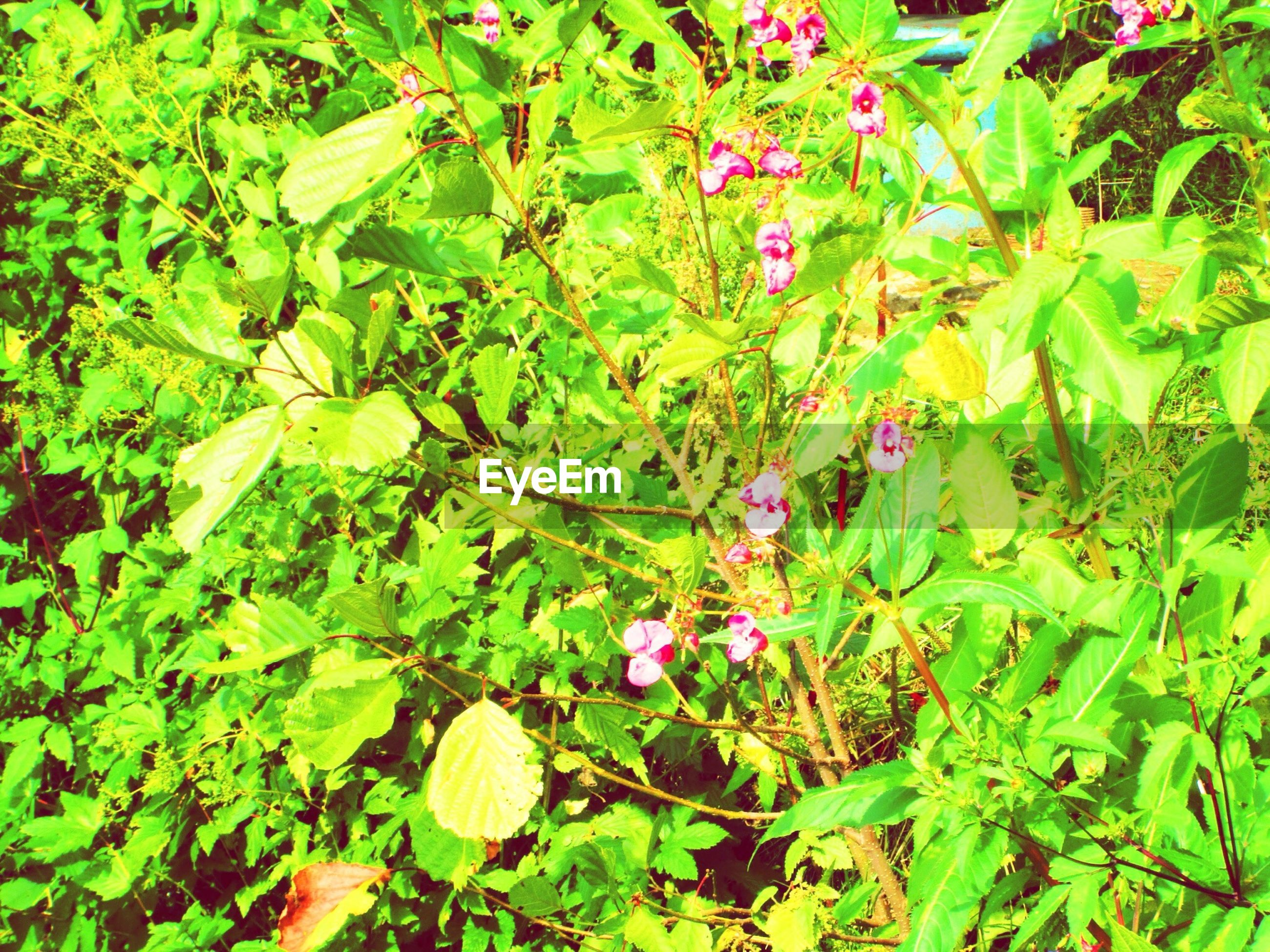 growth, leaf, green color, plant, freshness, nature, flower, beauty in nature, growing, green, fragility, high angle view, day, outdoors, lush foliage, close-up, no people, tranquility, field, sunlight