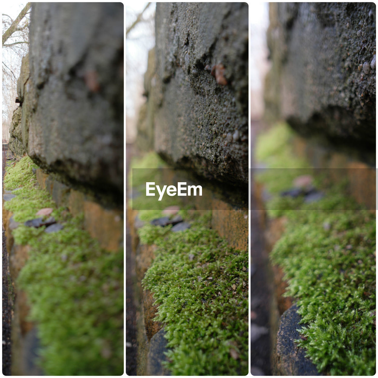 no people, day, outdoors, moss, growth, nature, plant, collage, close-up, water, tree, beauty in nature
