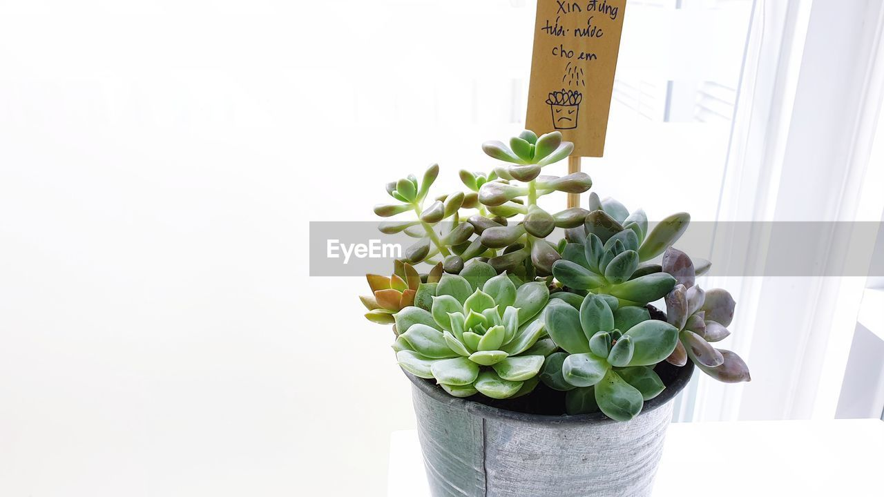 green color, growth, no people, plant, potted plant, succulent plant, indoors, copy space, nature, studio shot, close-up, text, plant part, beauty in nature, freshness, leaf, white background, communication, day, wellbeing, houseplant