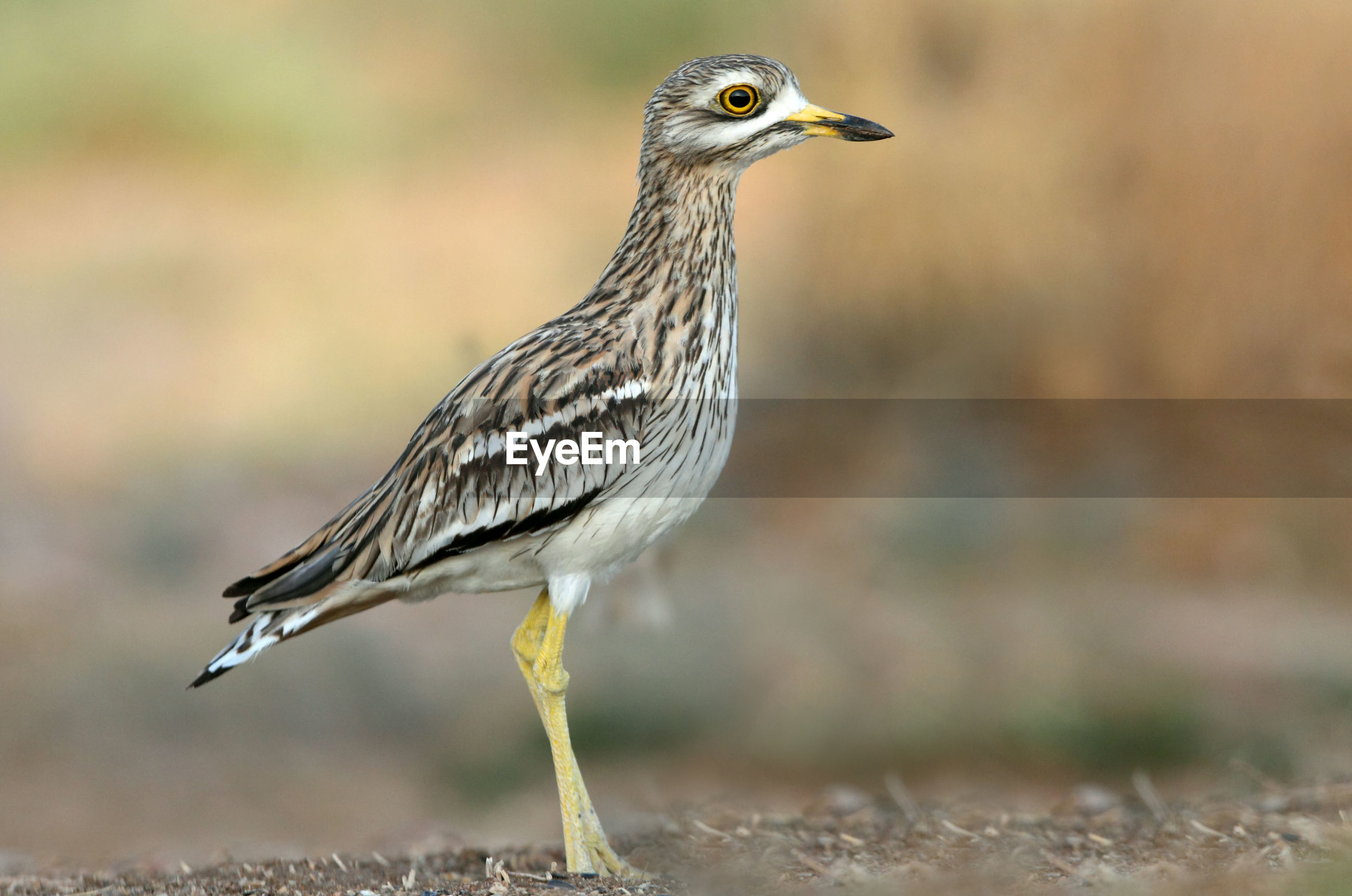 CLOSE-UP OF A BIRD PERCHING ON A LAND