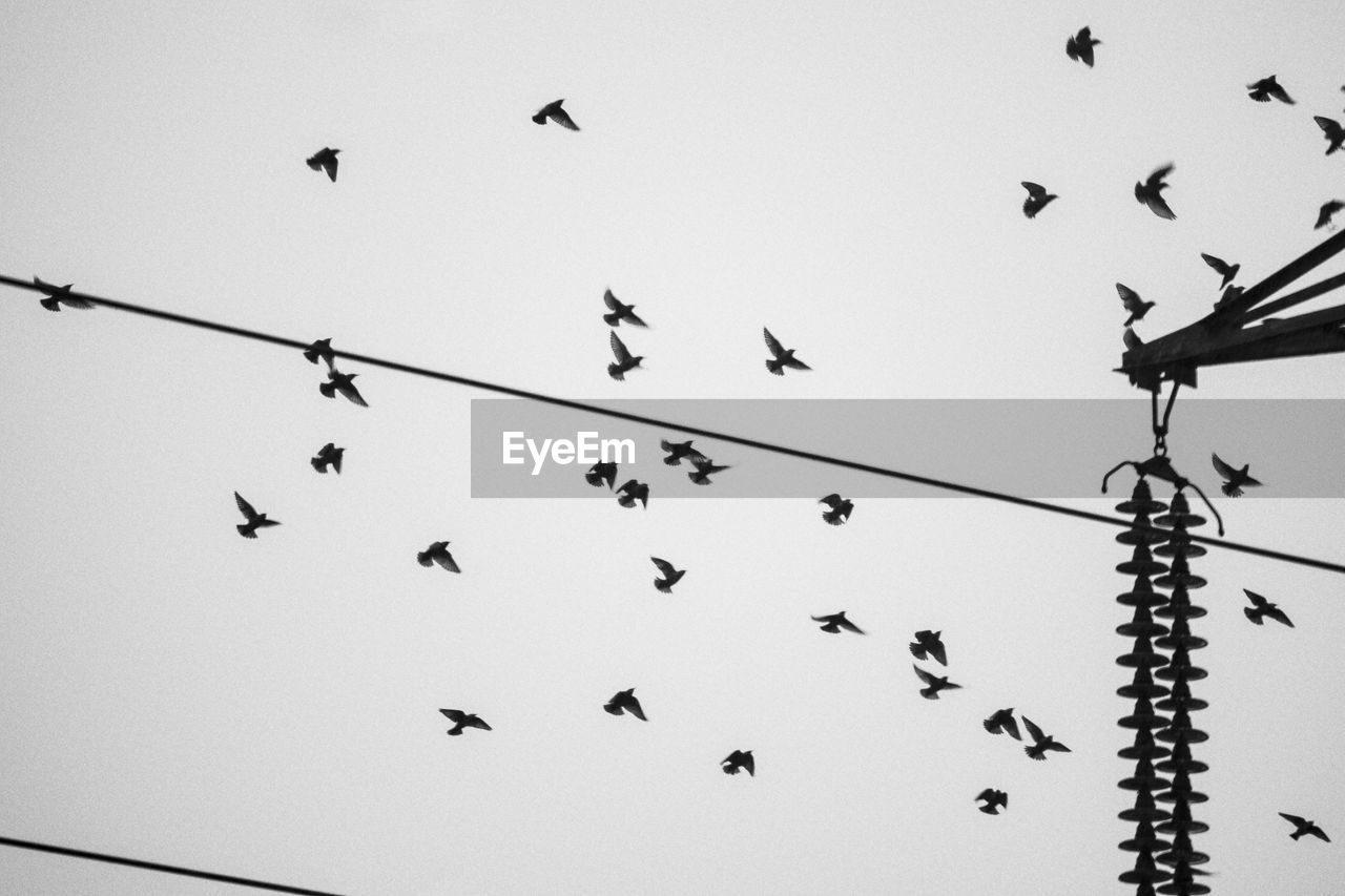 vertebrate, sky, group of animals, animal, animals in the wild, bird, large group of animals, animal themes, low angle view, animal wildlife, cable, flock of birds, perching, clear sky, no people, nature, day, electricity, power line, outdoors, power supply