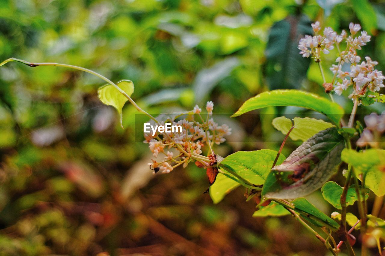 plant, growth, flower, beauty in nature, close-up, flowering plant, animal wildlife, plant part, animals in the wild, leaf, nature, fragility, green color, vulnerability, focus on foreground, day, no people, animal themes, invertebrate, insect, outdoors, flower head, pollination, leaves