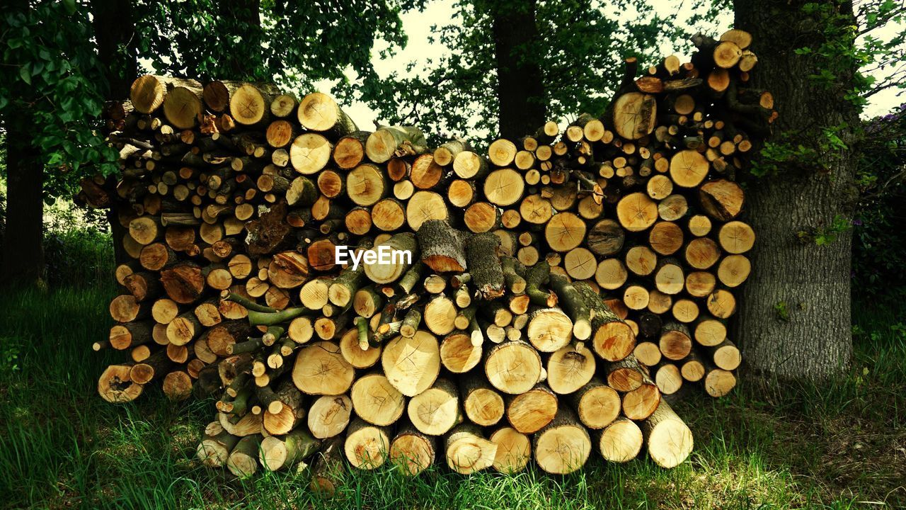 tree, stack, forest, wood, timber, deforestation, log, firewood, lumber industry, large group of objects, plant, fuel and power generation, nature, abundance, wood - material, fossil fuel, environmental issues, woodpile, no people, heap, outdoors, chopped